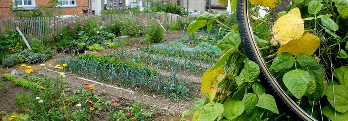 Valoriser la coopération,  l'alimentation durable et la nature en ville.