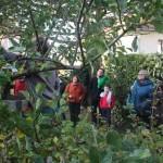 Atelier pratique : Taille des arbres fruitiers