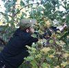 Opération «entretien du verger et taille des fruitiers»